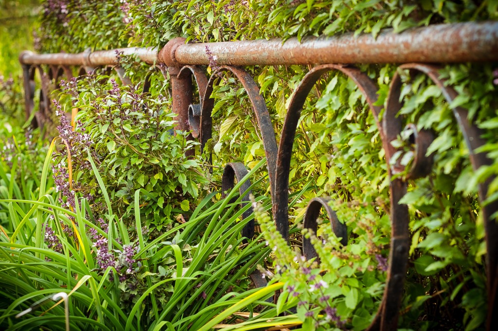 Studio Chyree Powell Gardens